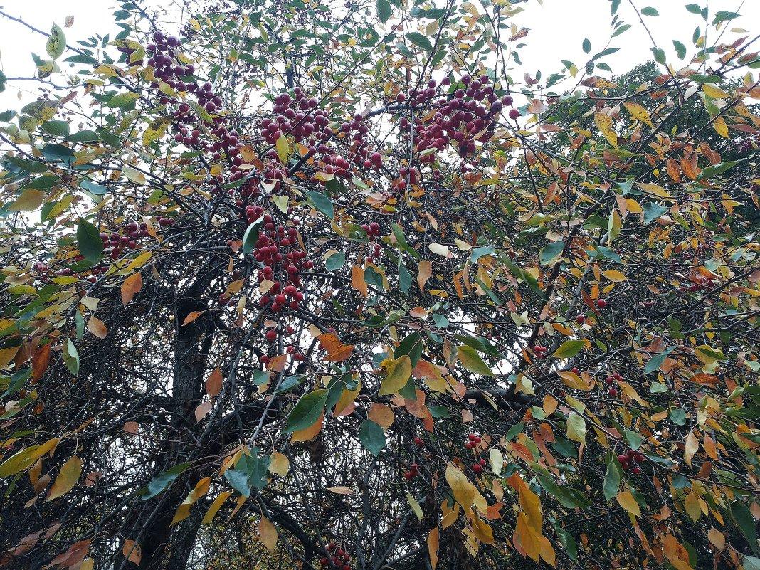 Осень в Московском парке - Владимир Прокофьев