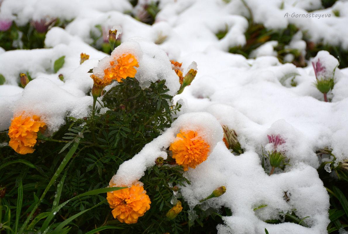 Сегодня в Алма-Ате выпал первый снег. - Anna Gornostayeva
