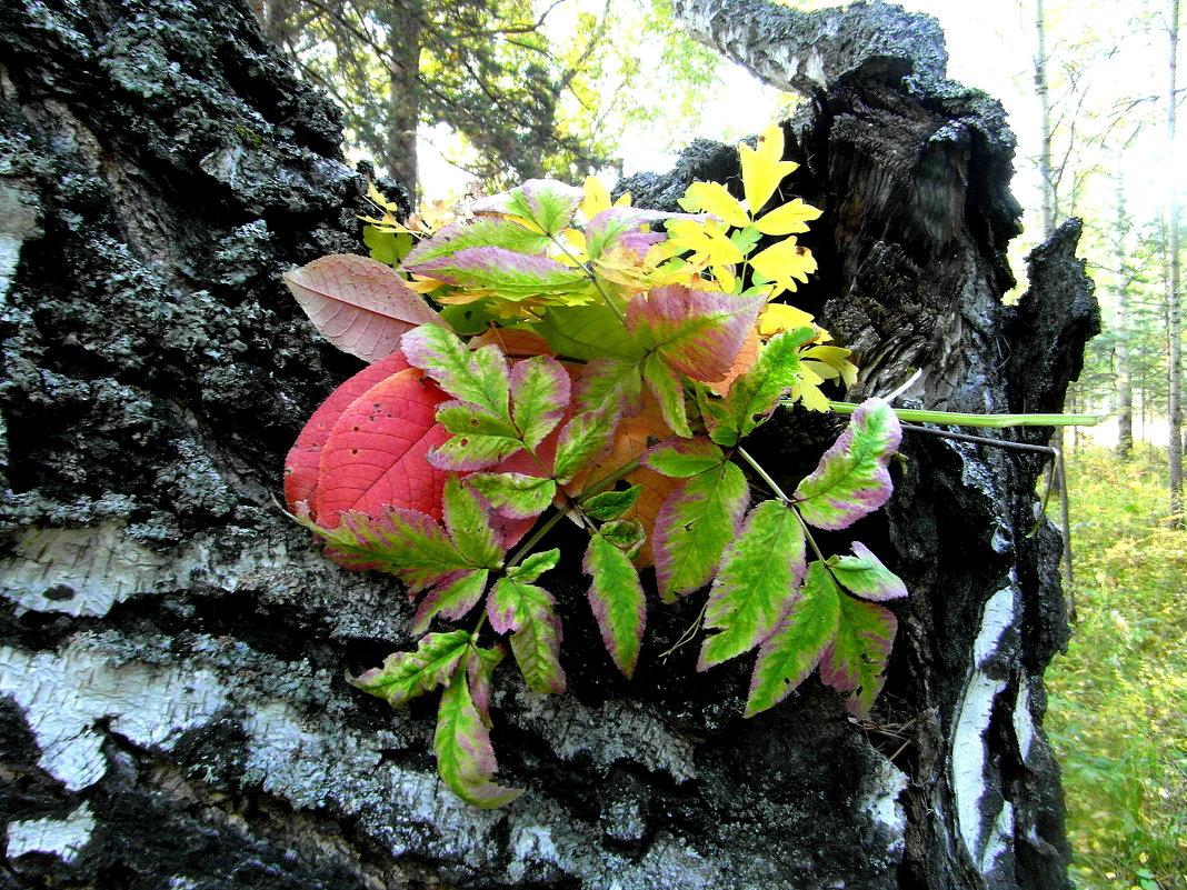 Осенние листья. - nadyasilyuk Вознюк