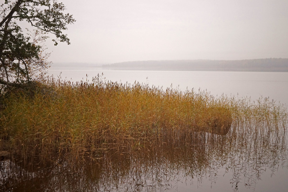 Осень в Монрепо. - сергей лебедев