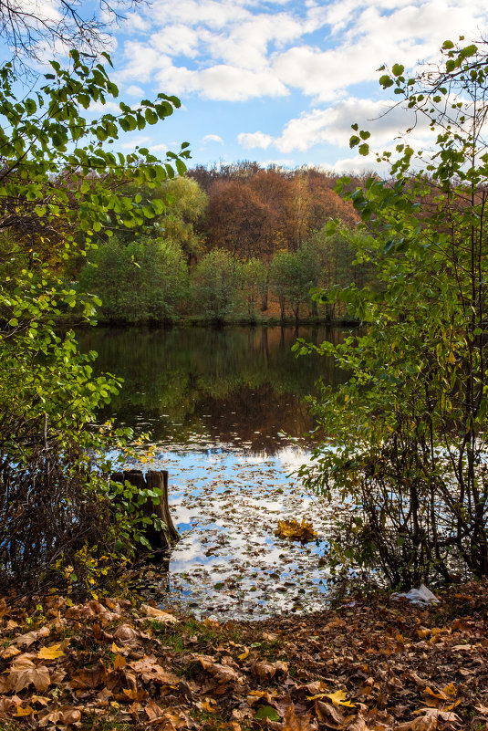 лесное озеро - Андрей ЕВСЕЕВ