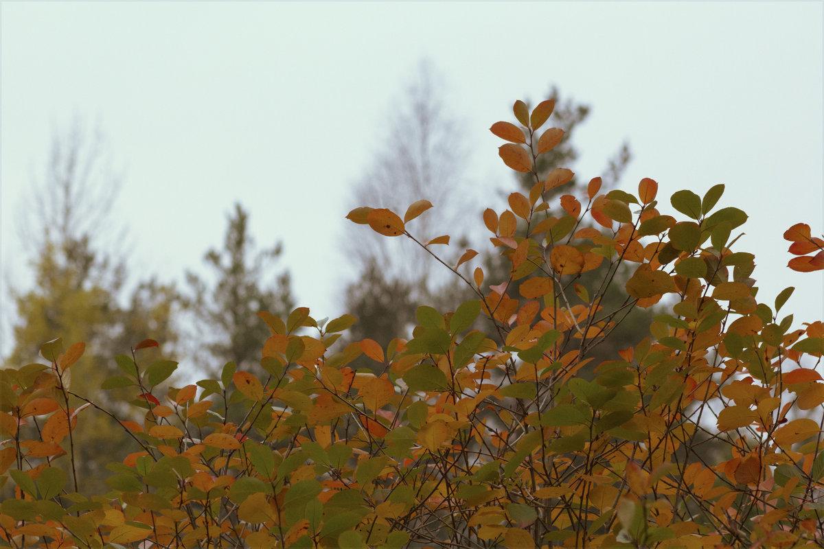В октябре - Aнна Зарубина