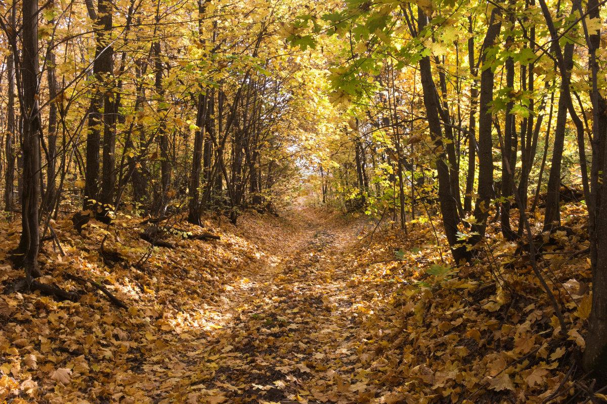Осенний лес. - Владимир Сквирский