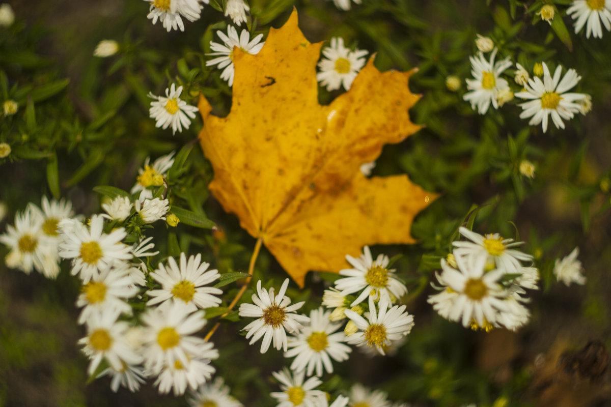 один среди цветов - Любовь Потравных