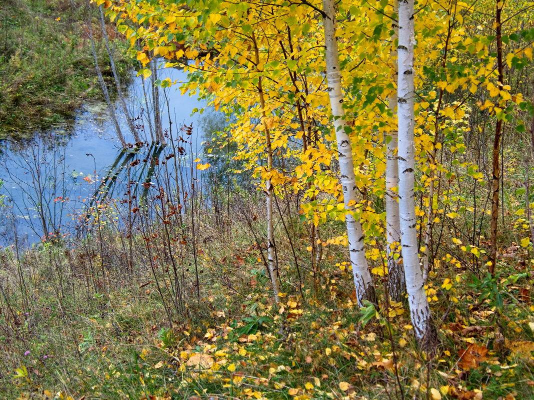 Последние листья - Валерий Шибаев