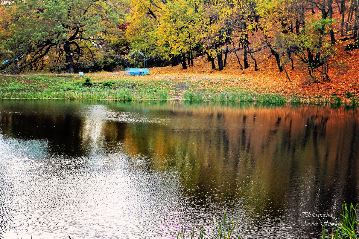 Осенний пруд - Андрей Ситников