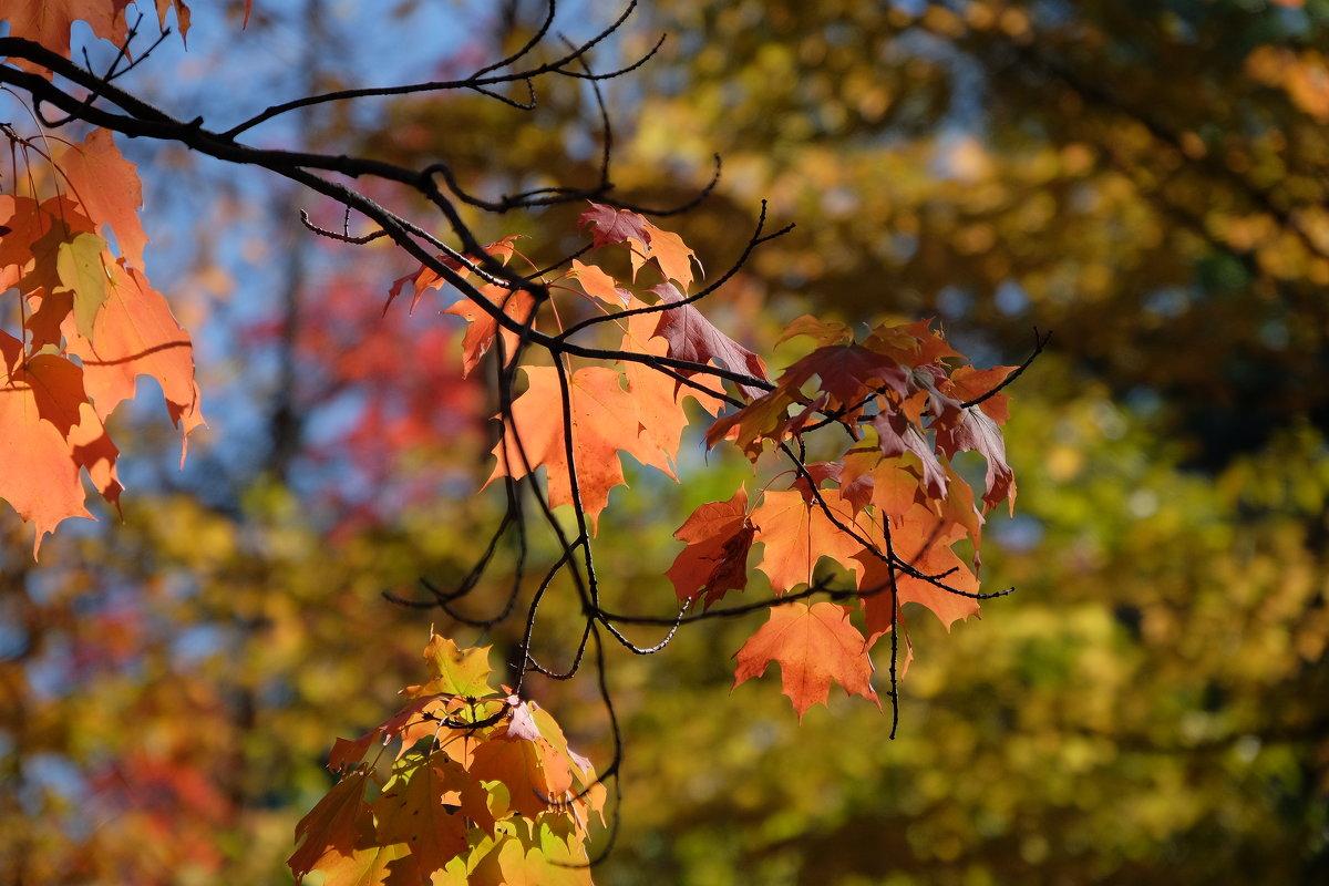 Фрагмент. Осень. - Alexander Hersonski