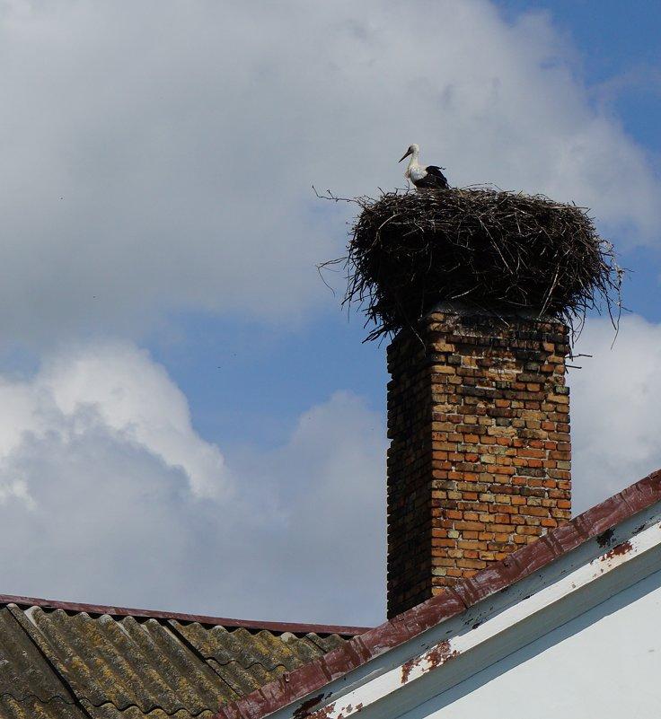 Аист на крыше, счастье под крышей... - Ольга Чистякова