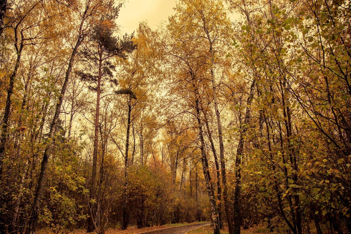 Осенние зарисовки - Николай В