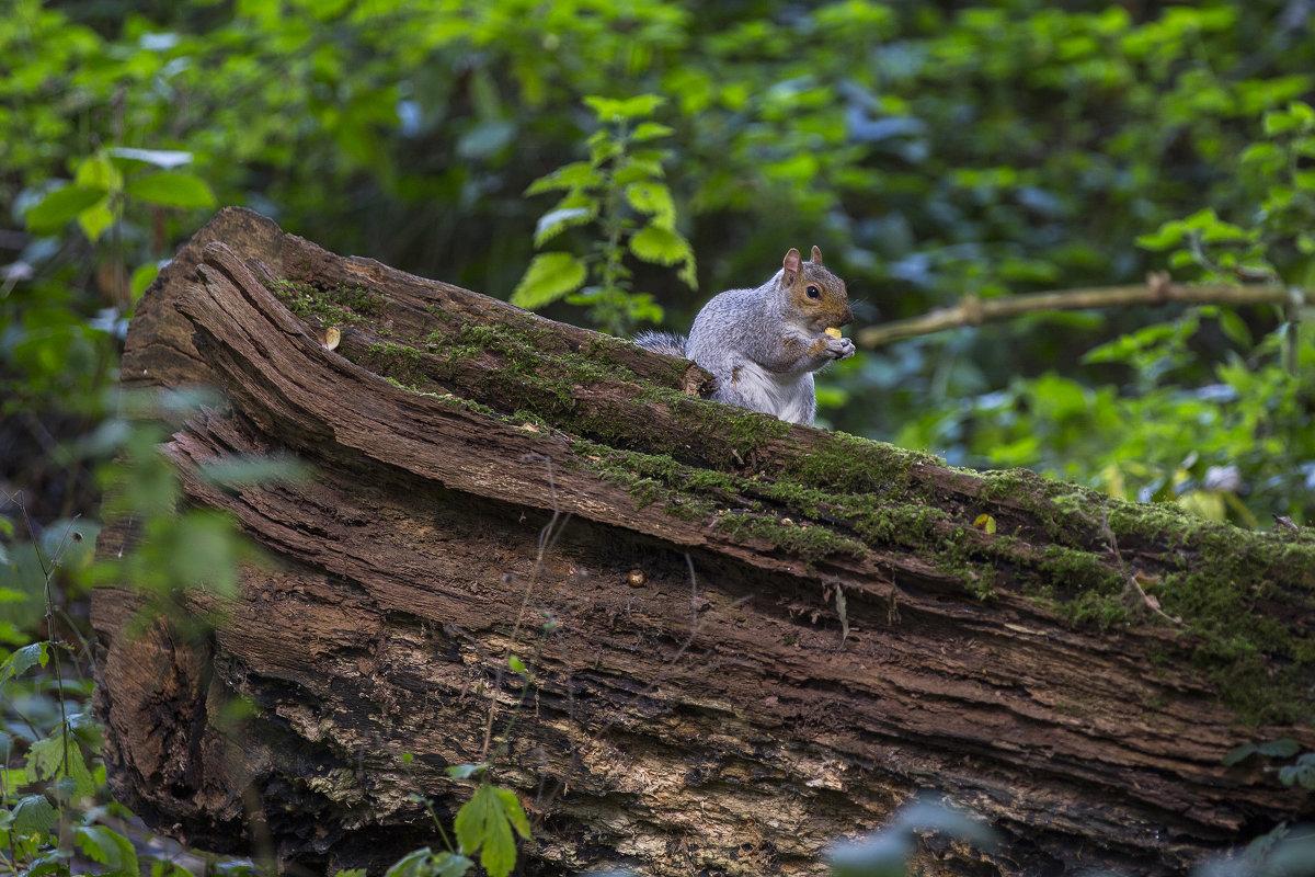 Squirrel - Vitaliy Turovskyy