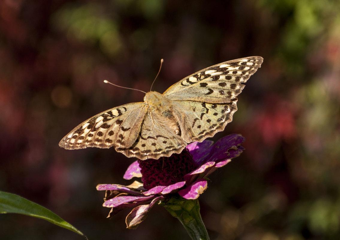 Бабочка - Gmm12345