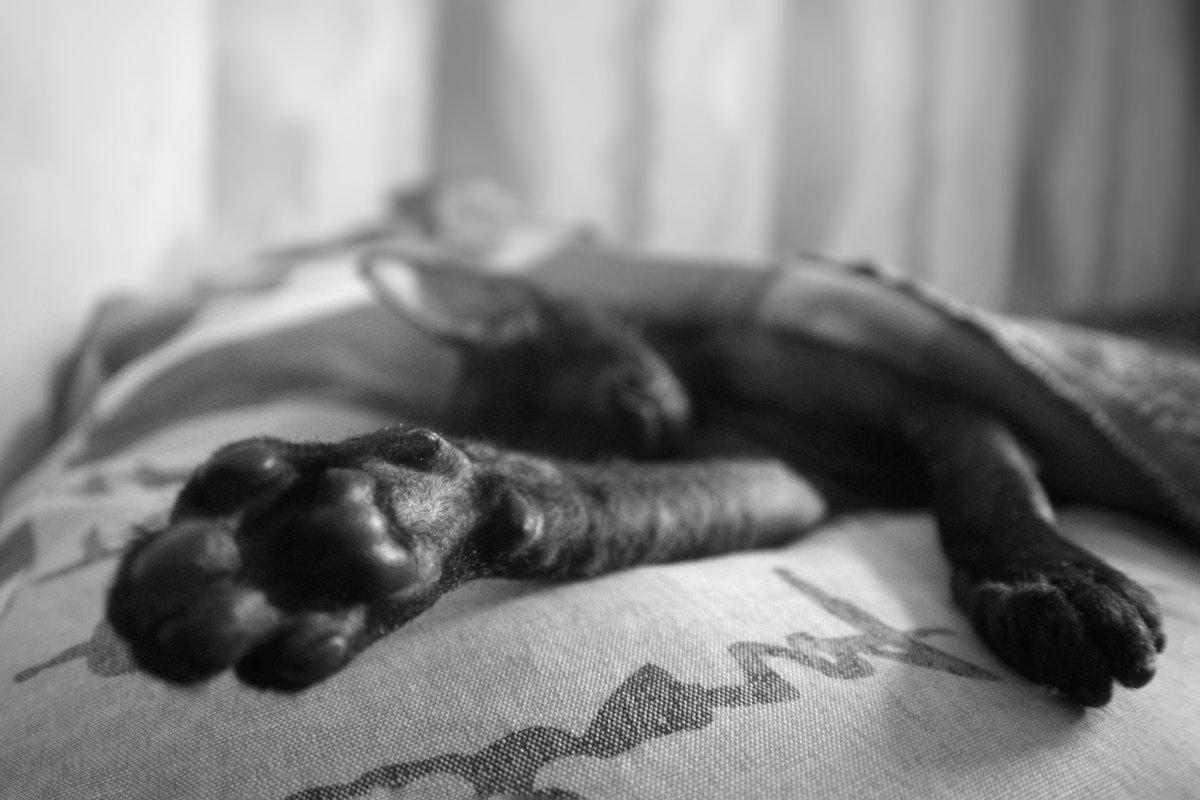 Мой кот - Марина Влади-на