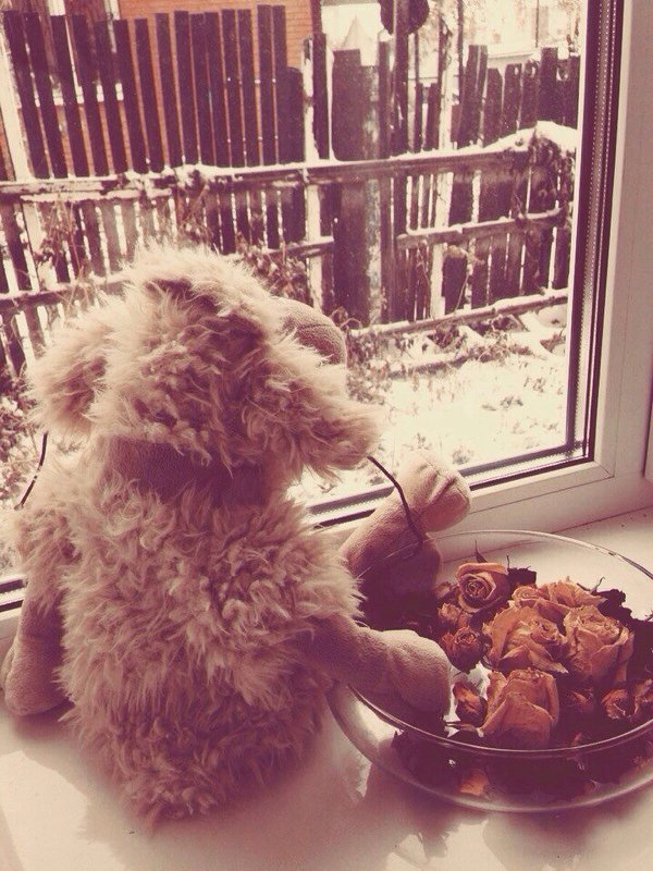 Первый снег - Ольга Токмакова