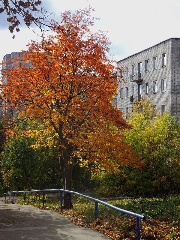 Осень - Алексей Golovchenko