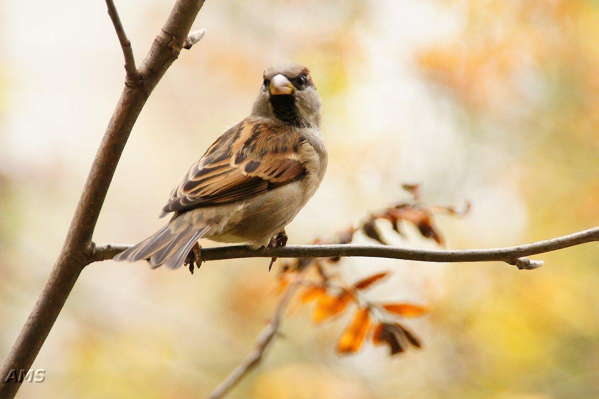Птиц - kolyeretka