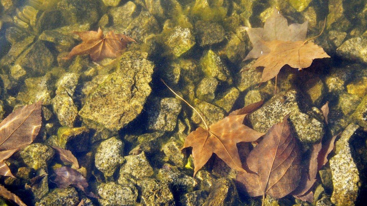 Осенний пруд - Volkov Igor