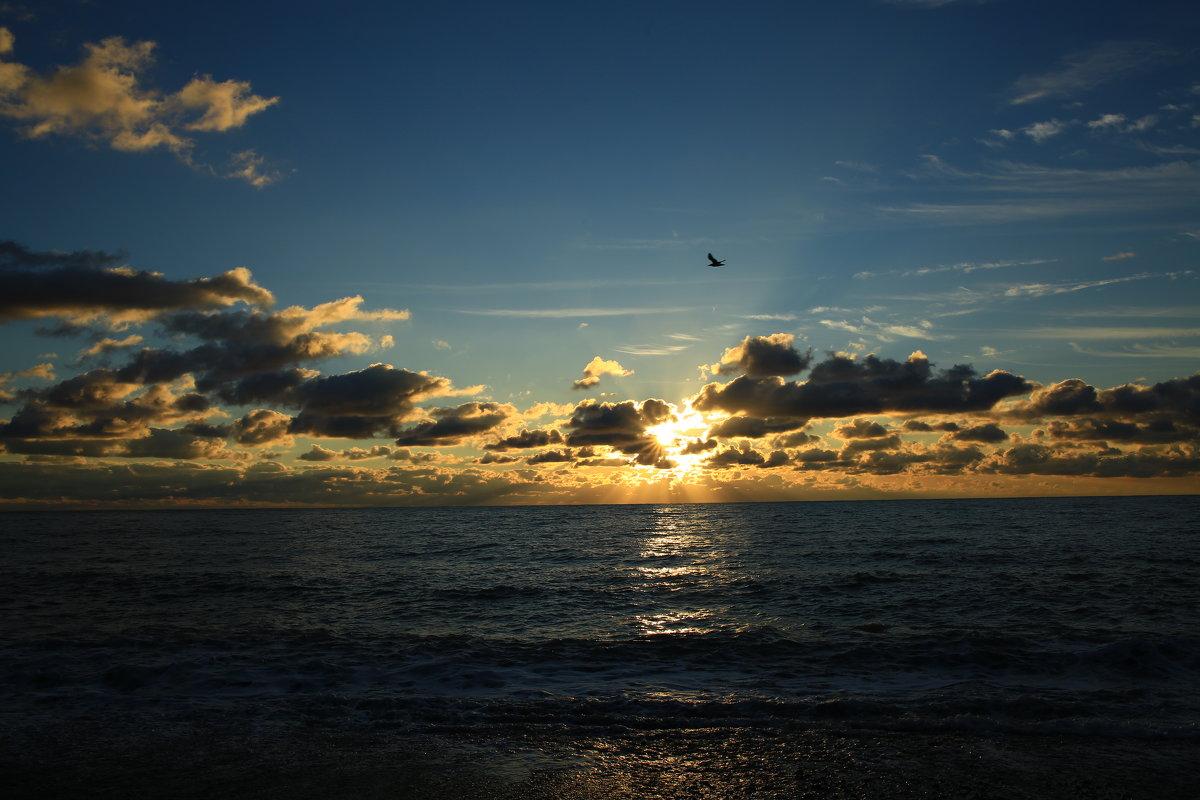 Буревестник на закате солнца - valeriy khlopunov