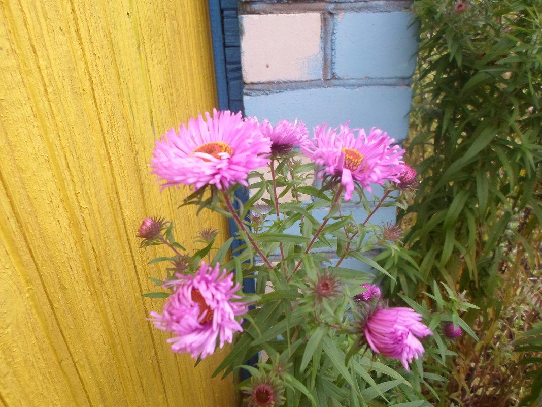 Цветы октября - BoxerMak Mak