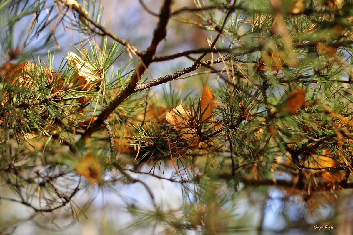 Падают листья - Сергей Козлов