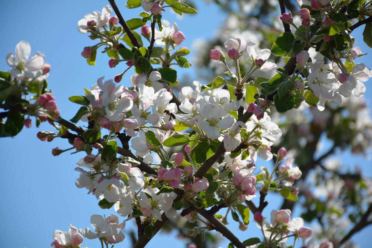 Весны цветенье... (этюд 9) - Константин Жирнов