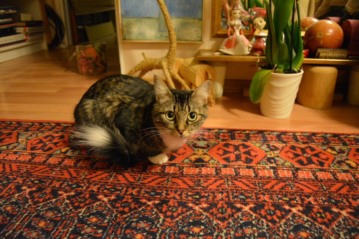 Мама-кошка - Сербина Анна