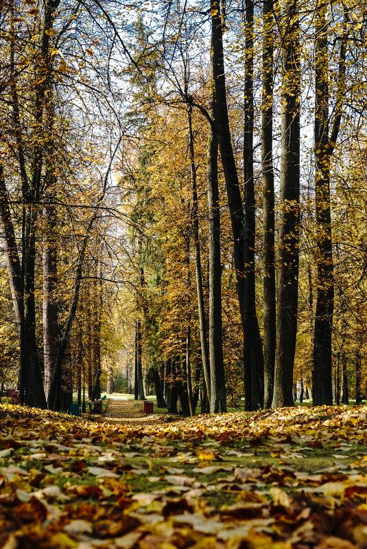 В осеннем парке - Владимир Орлов