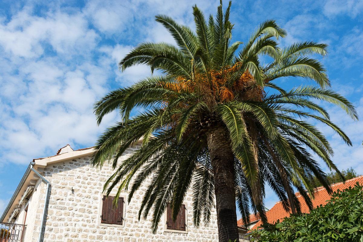 palm - Vitalij P