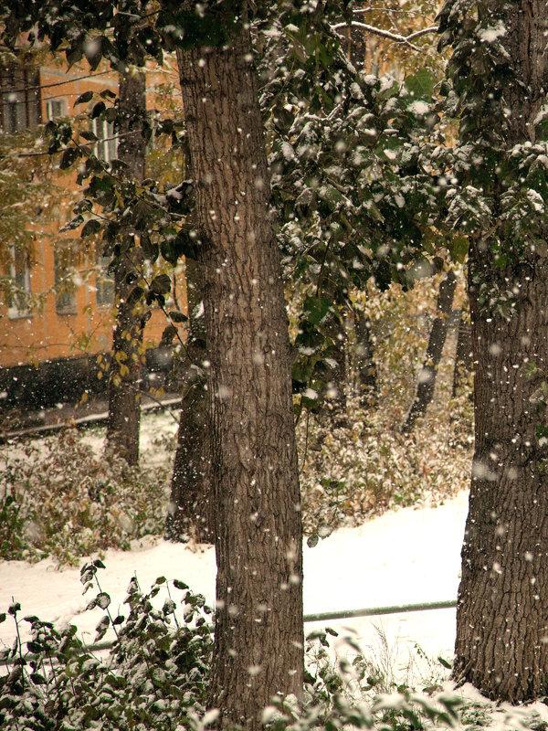 Снегопад, один из первых - Ольга