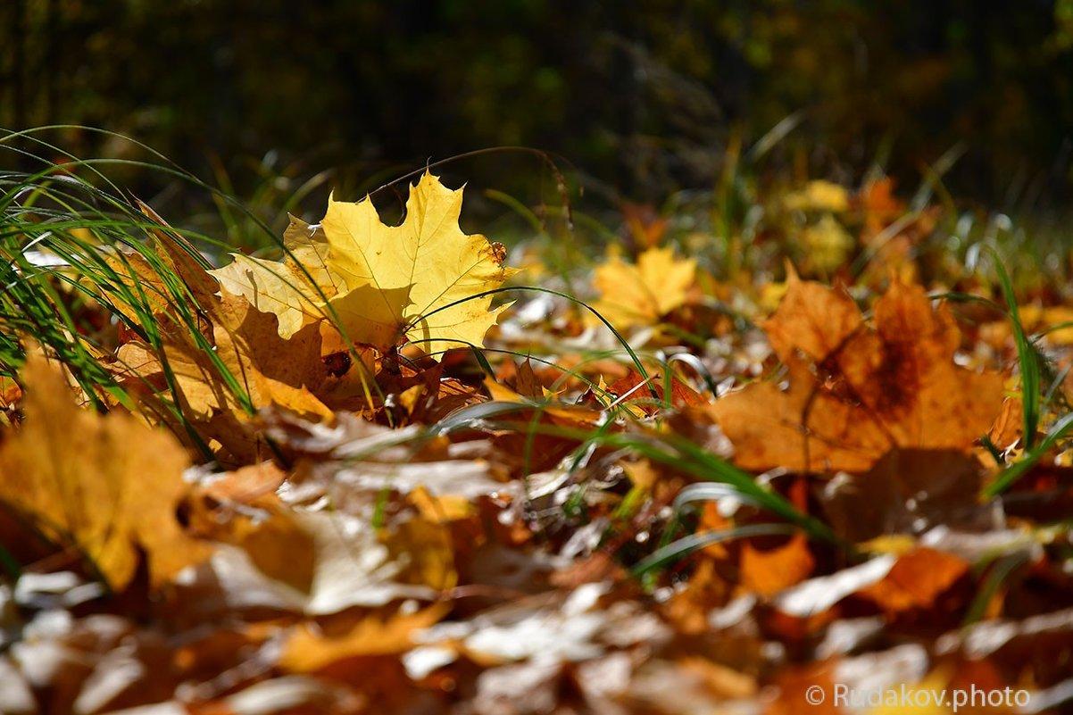 Последний день золотой осени - Сергей
