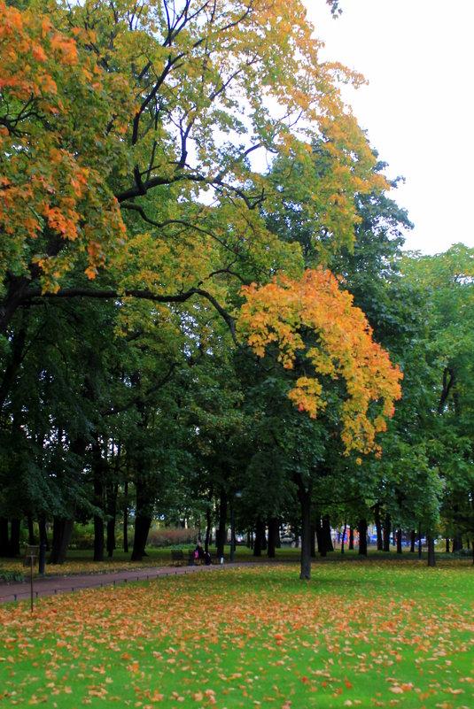 А осень рисует... - Evgenia Sharabanova