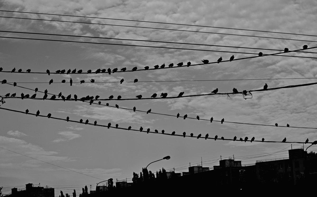 снова птицы в стаи собираются.. - Ольга Заметалова
