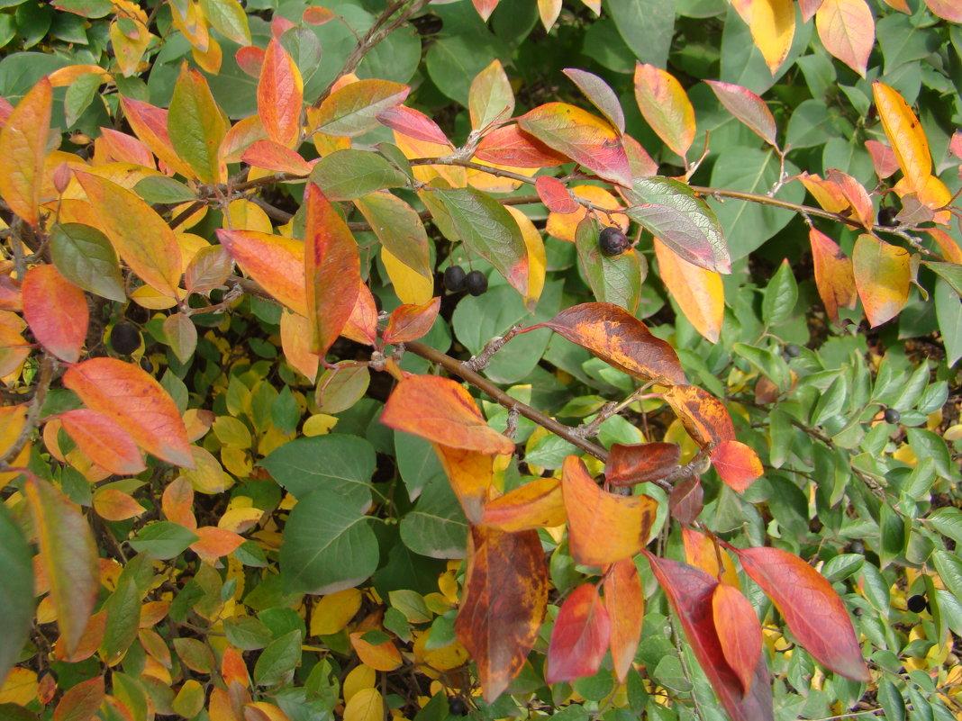 Осенние листья - марина ковшова