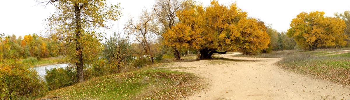 Осенняя панорама - Анастасия сосновская