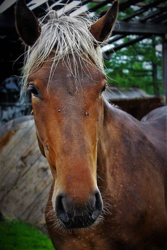 Портрет лошади - Сергей Чиняев