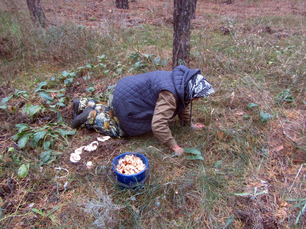 ох,нелёгкая это работа...грибы собирать... - tgtyjdrf