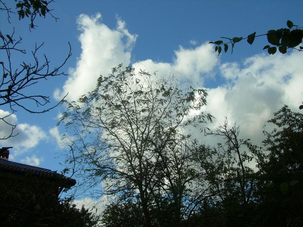 Орнаменты осени на фоне облаков - татьяна