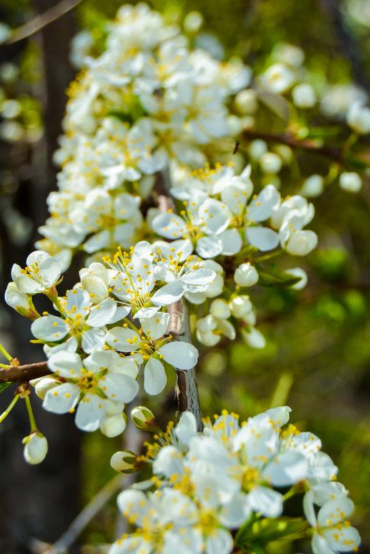 как много цветиков цветёт - Света Кондрашова