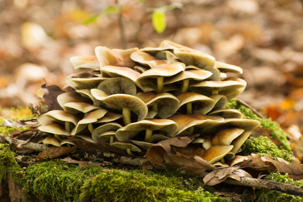 грибы - Евгений