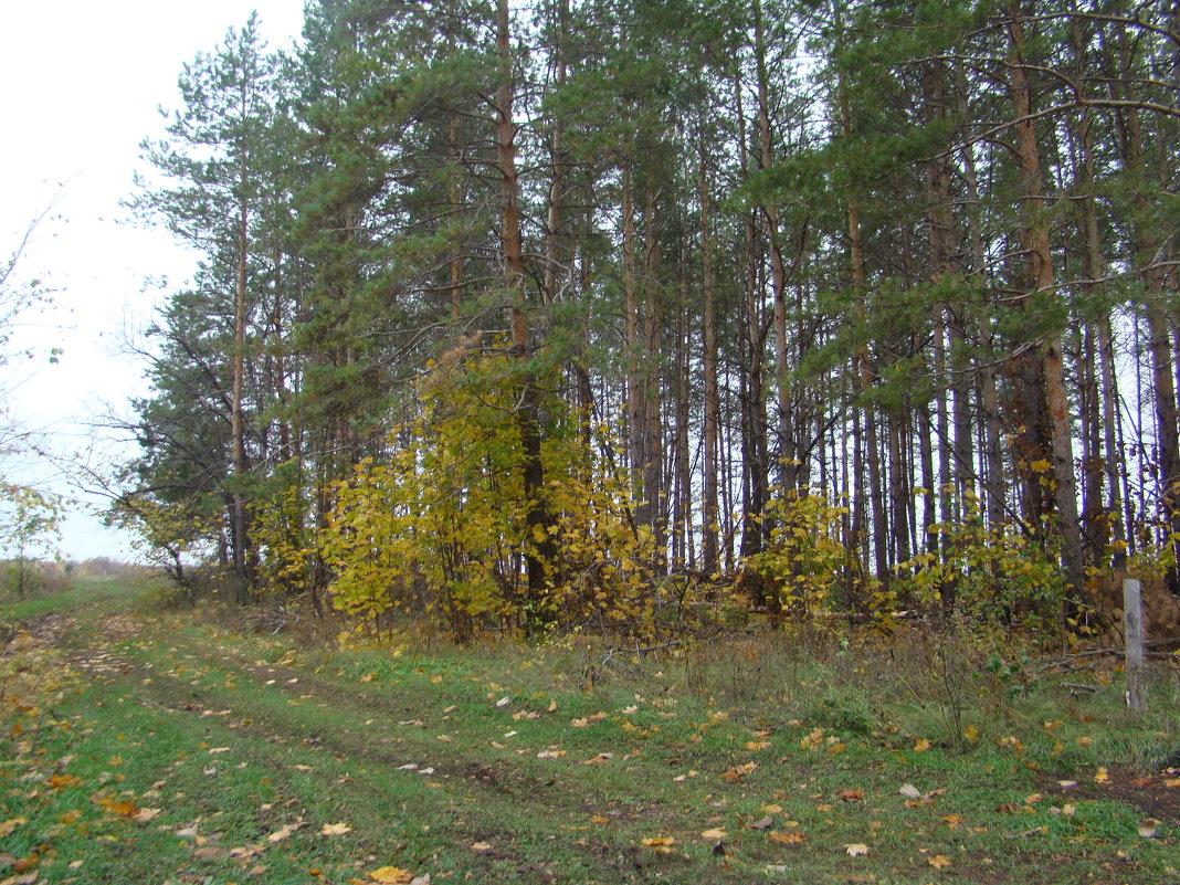 В лес за грибами - марина ковшова