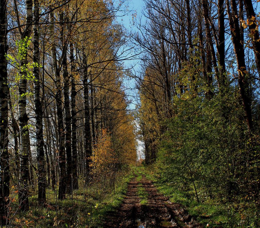 Осенняя тропа уводит вдаль... - Наталья Лунева