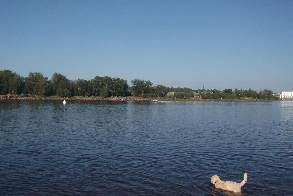 Река и лето - Svetlana Lyaxovich