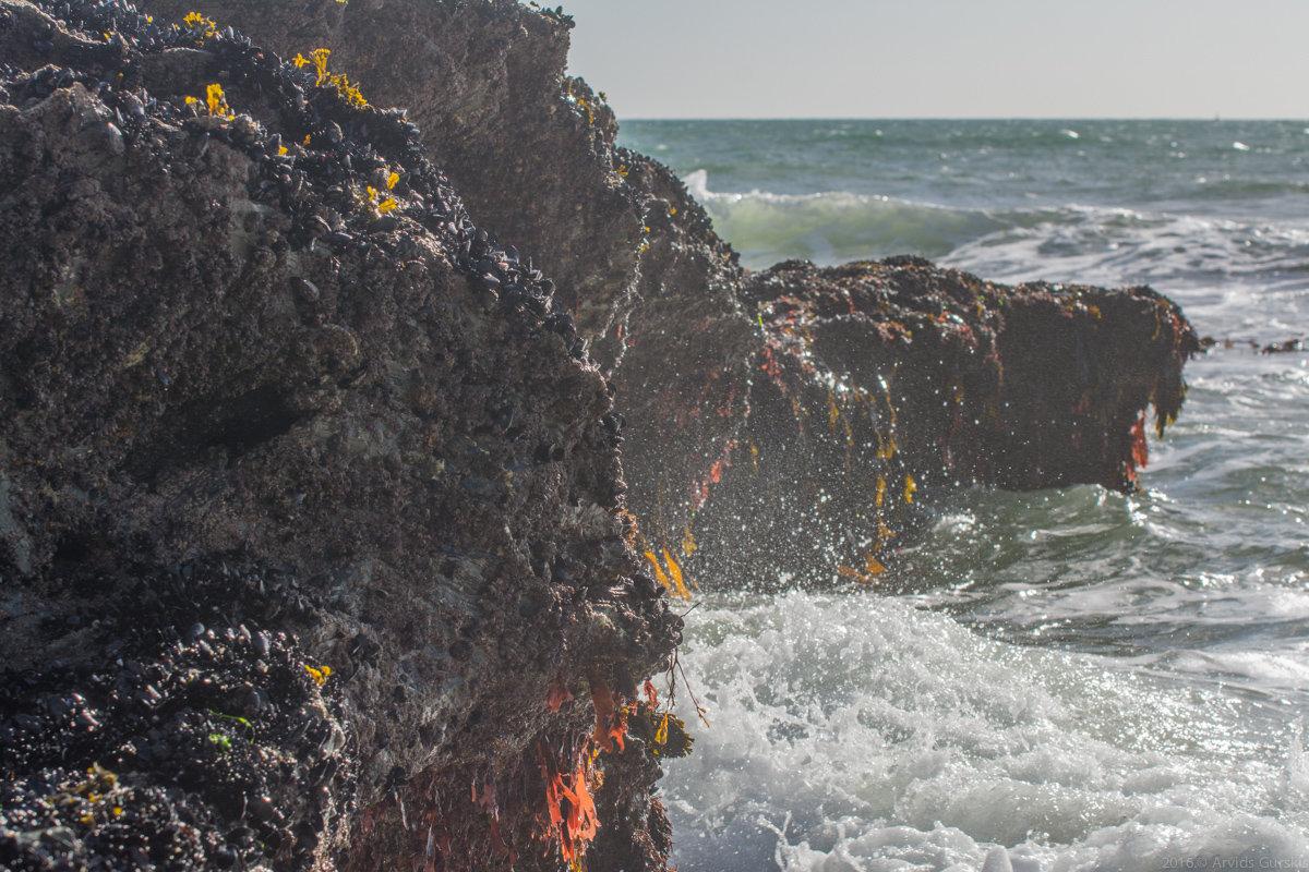 Мокрые камни - Арвидс Гурскис