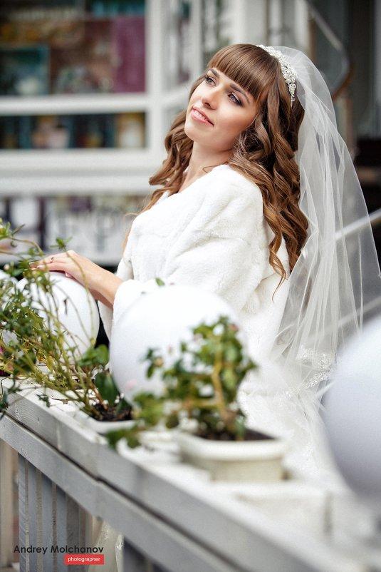 Свадьба Анны и Александра - Андрей Молчанов