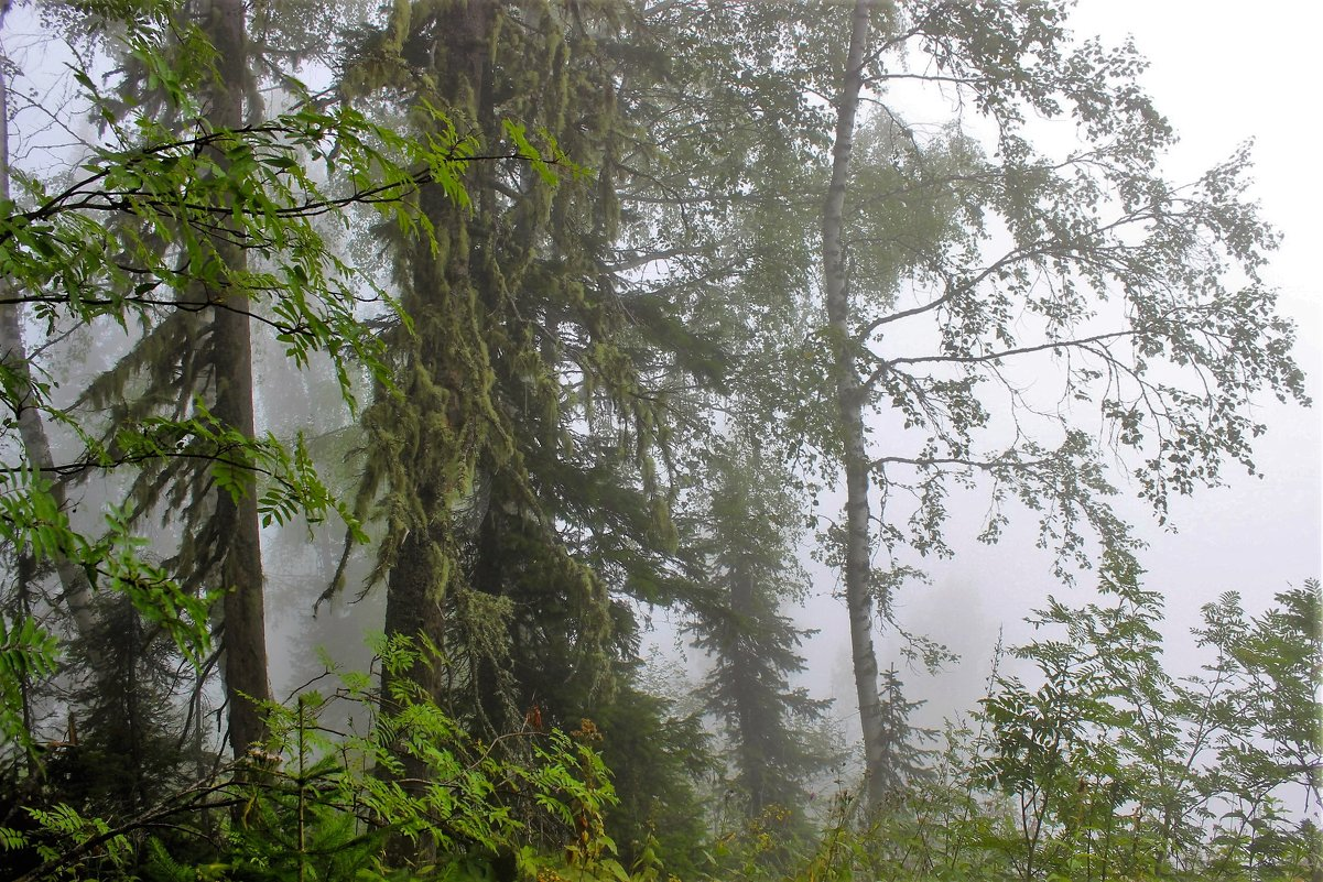 Туманным утром - Сергей Чиняев