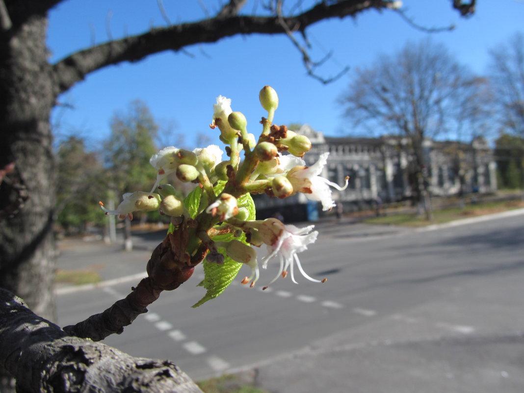 Осеннее цветение - Алла Рыженко