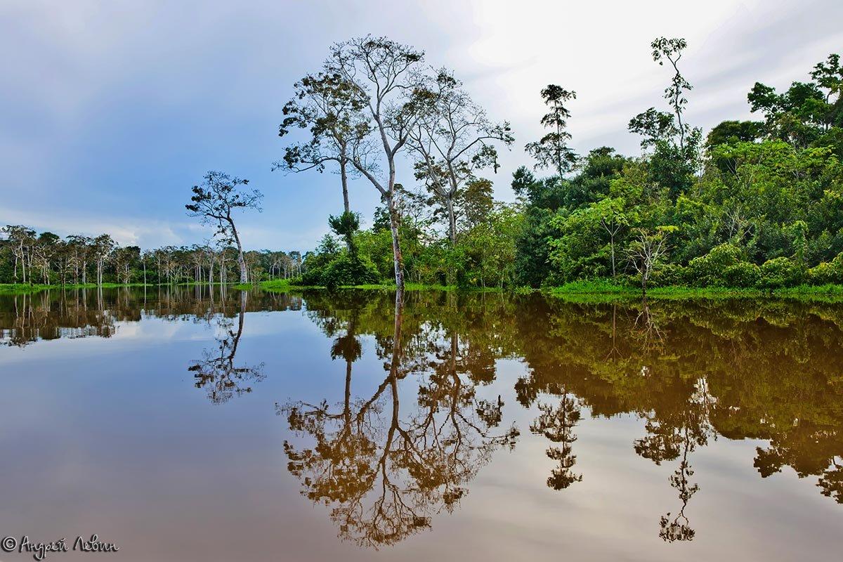 Перу. После рыбалки в заливной протоке Амазонки - Андрей Левин