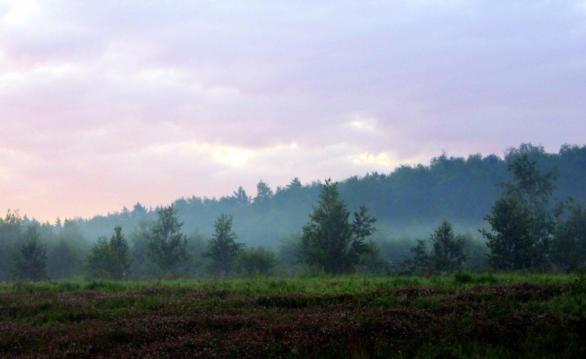 Утренний туман. - Валентина ツ ღ✿ღ