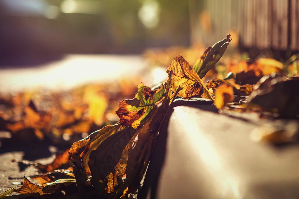 Вечерний свет сквозь осени листьев - Алексей Румянцев