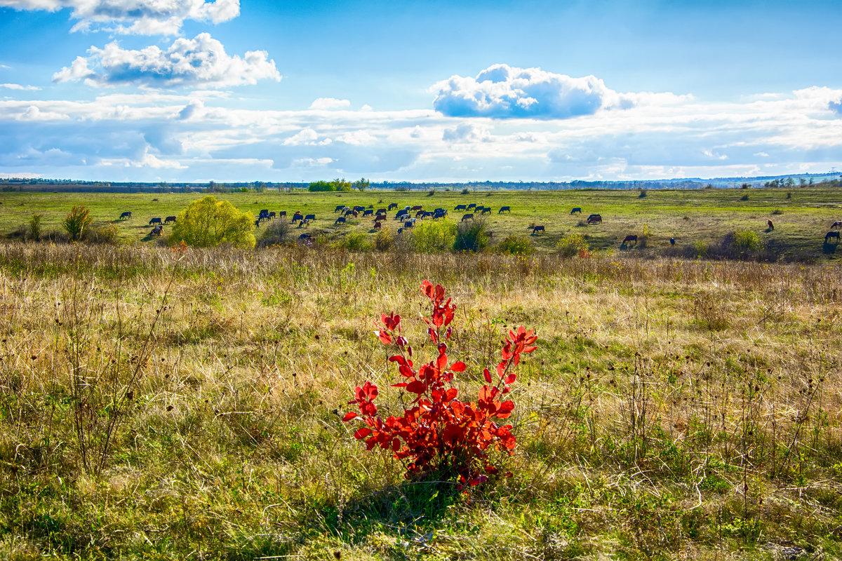 Осень на пастбище - Юрий Шапошник