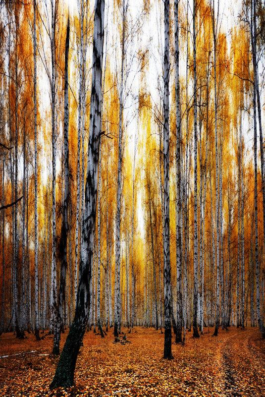 Осеннее березовое - Татьяна Губина
